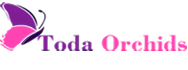 Lan Hồ Điệp Toda Orchids