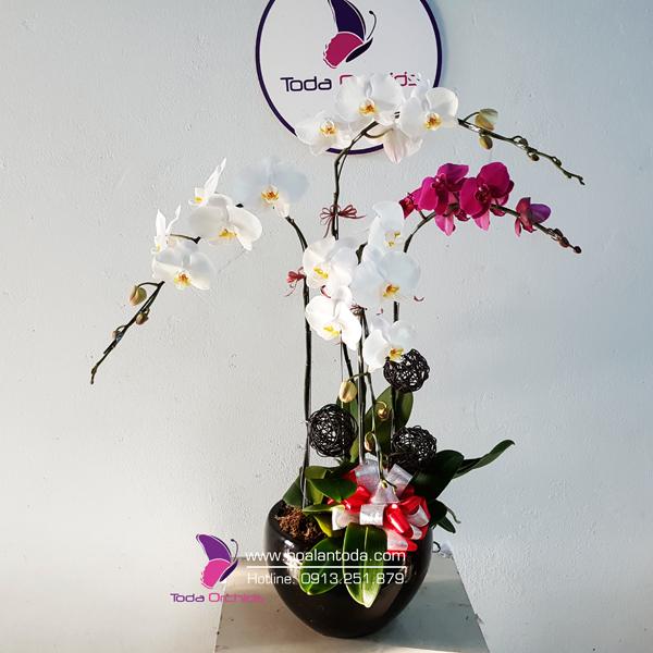 hoa tang ngay 14-2