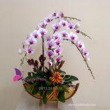 chau hoa lan ho diep thuyen hoa