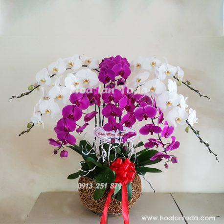 chau hoa lan ho diep chung mung