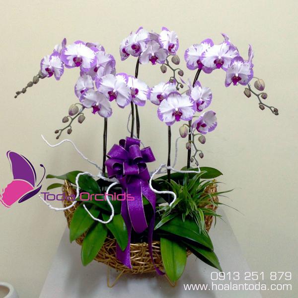 hoa tang thay co ngay 20-11