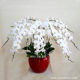 hoa lan ho diep trang chau 9 canh