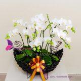 hoa lan tang me ngay 20-10