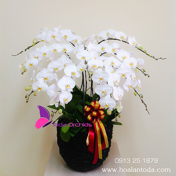 Chậu hoa lan trắng, Đong đầy kỉ niệm