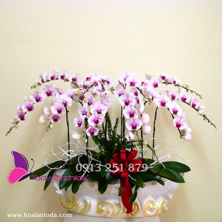 hoa tang khai truong chuc mung