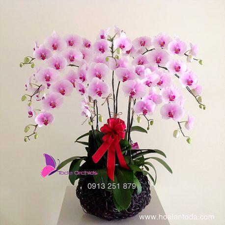 chau hoa lan ho diep canh trang nhi hong