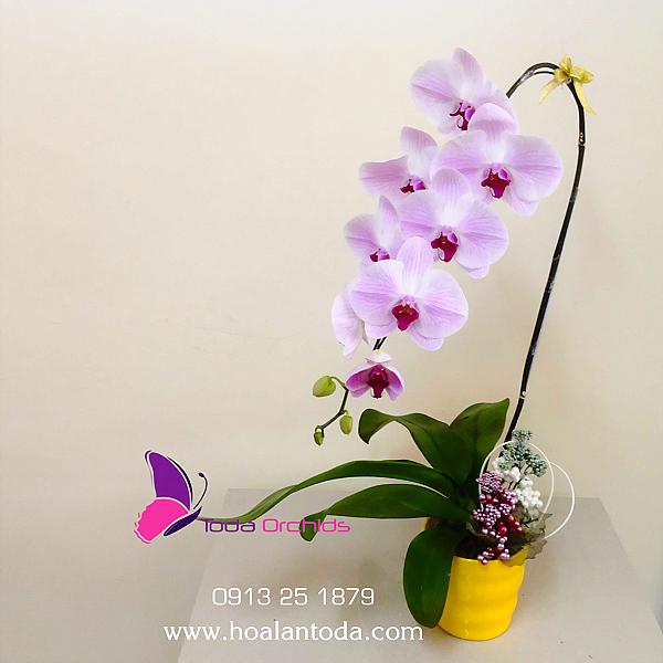 chau hoa diep trang nhi tim 1 canh