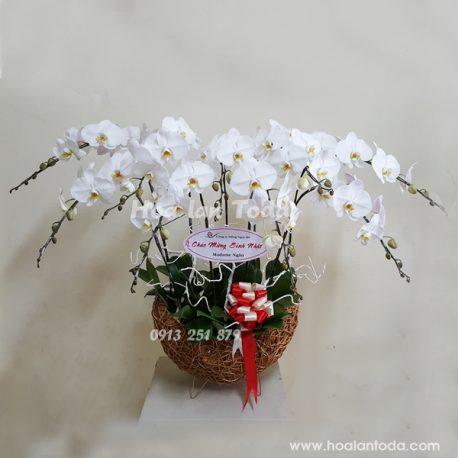 hoa tang sinh nhat