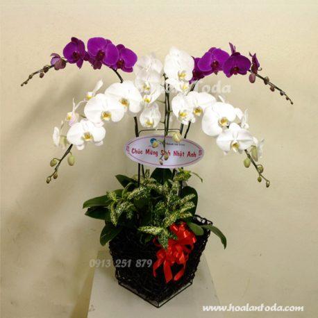 hoa tang sinh nhat dep nhat