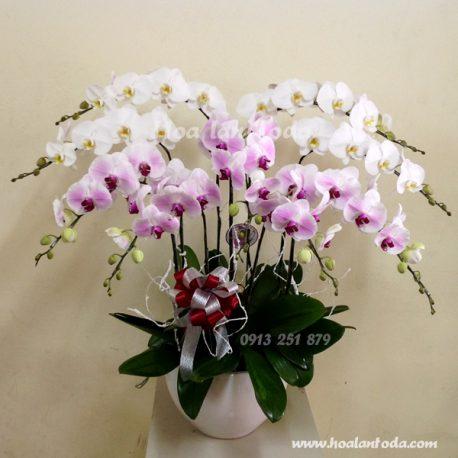hoa dep ngay 20/10 tang chi em phu nua