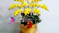 hoa tang ngay 8 thang 3