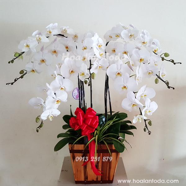 hoa tang me ngay 8-3