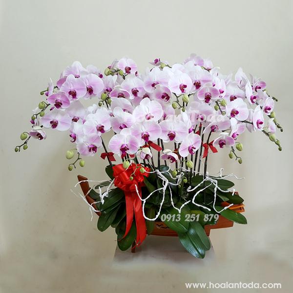 hoa tang sep ngay 8 3