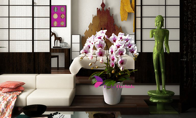 hoa phong khach