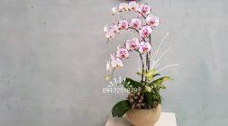 goi y chon hoa tang ban gai, nguoi yeu ngay 20-10 y nghia