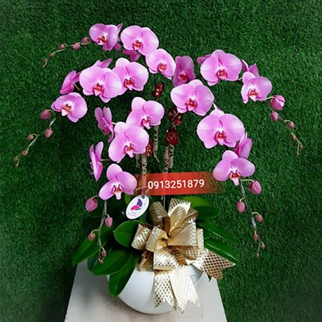chau hoa lan hong dep tang ban gai y nghia